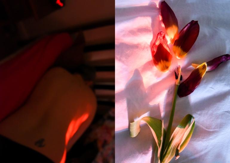 Bed & Tulip